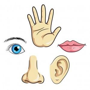 Մարմնային զգայություններ և զգայական ինտեգրացիա